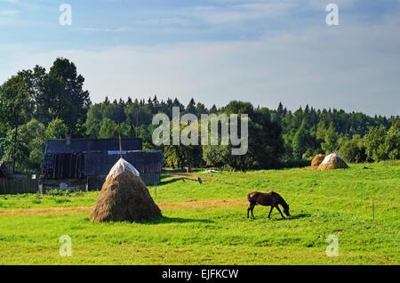 Paesaggio rurale. Marrone a cavallo e pagliaio sul pascolo. Foto Stock