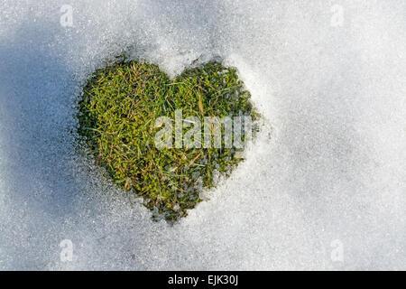 La fusione della neve a forma di cuore la molla amore concetto sfondo clima freddo relazioni. La Svezia. Foto Stock
