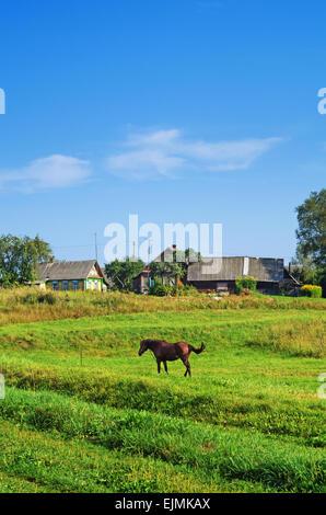 Paesaggio rurale. Cavallo marrone sul pascolo. Foto Stock