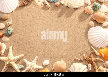 Telaio composto da conchiglie sulla spiaggia Foto Stock