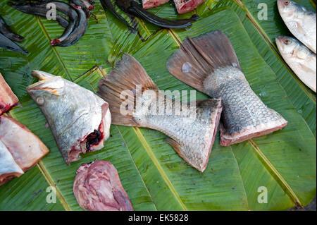 In prossimità della testa di pesce, code di pesce e i visceri di pesce su una verde foglia di banano in Yangon mercato Foto Stock