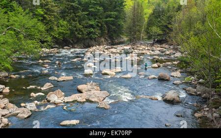 New York, Adirondack Park, Ausable River, l uomo e la donna la pesca con la mosca, black lab cane sul rock Foto Stock