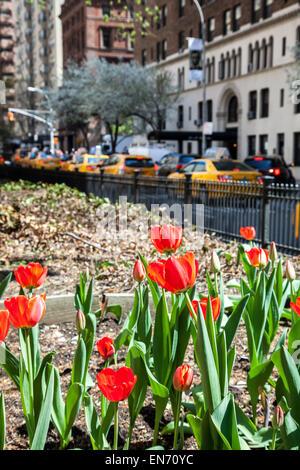 New York, NY, STATI UNITI D'AMERICA. 22 Aprile, 2015. Park Avenue vista con i tulipani in NYC visto nella città Foto Stock