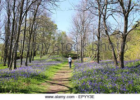 La Pennine Way, Nr bassa forza, Teesdale superiore, Co Durham Regno Unito. 23 maggio 2015 Bank Holiday sabato e Foto Stock