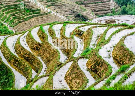 Yaoshan montagna, Guilin, Cina hillside terrazze di riso paesaggio. Foto Stock