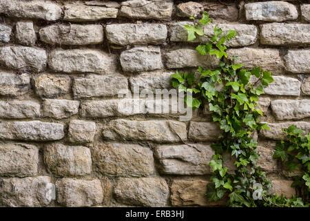 Sfondi - Un antico muro di pietra con ivy crescendo. Foto Stock