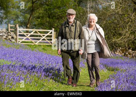 Una vecchia coppia a piedi attraverso Bluebells sopra Austwick nel Yorkshire Dales, UK. Foto Stock