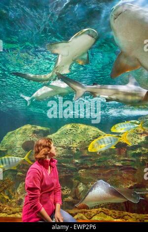 Gli squali, acquario in Loro Parque, Puerto de la Cruz, Tenerife, Isole Canarie, Spagna Foto Stock
