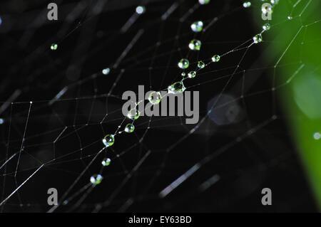 Fotografia macro di una ragnatela e coperta di vegetazione da gocce di pioggia Foto Stock