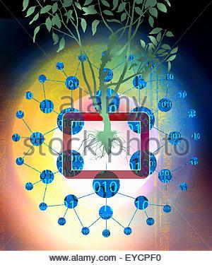 Codice binario dati intorno ad albero che cresce dalla tavoletta digitale Foto Stock