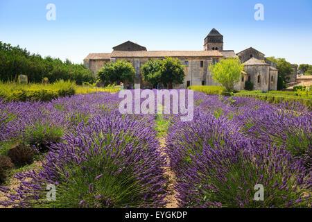 Il campo di lavanda in piena fioritura alla Maison de Sante San Paolo Monastero di San Remo Foto Stock