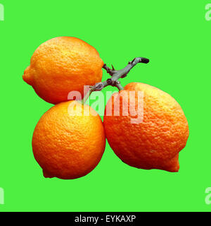 Limone; Limone, Rosso