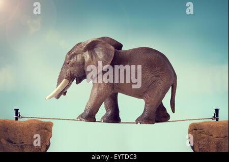 Elephant a camminare su una fune Foto Stock