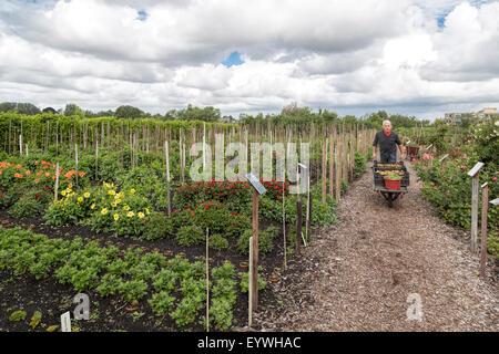 Giardiniere al lavoro nel giardino storico Aalsmeer, un giardino botanico in Aalsmeer, North Holland, Paesi Bassi. Foto Stock