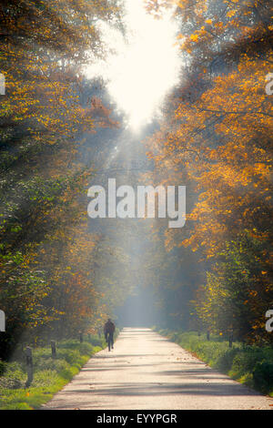 Biker su una strada attraverso la foresta in controluce con sunray, GERMANIA Baden-Wuerttemberg, Ortenau Foto Stock