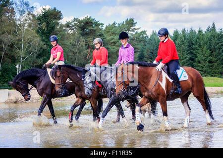 Warmblood quattro piloti a cavallo di acqua poco profonda Foto Stock