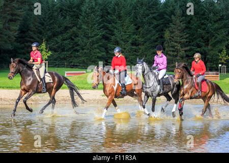 Warmblood quattro piloti a cavallo al galoppo attraverso il fondale basso Foto Stock