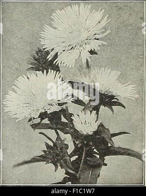 Dreer all'ingrosso listino prezzi : le sementi per piante fioristi semi vegetali, attrezzi, fertilizzanti, Sundries, etc Foto Stock