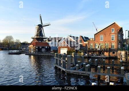 Paesi Bassi Olanda Settentrionale, Haarlem, fiume Spaarne e De Adriaan mulino a vento Foto Stock