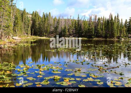 Ninfa Lago, Rocky Mountain National Park, COLORADO Foto Stock