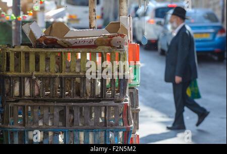 """(150922) -- Gerusalemme, Sett. 22, 2015 (Xinhua) -- Un ultra-ebrea ortodossa uomo cammina passato stie di pollo bianco in Mea Shearim, Gerusalemme, sul Sett. 21, 2015, per il tradizionale 'kaparot' avanti cerimonia di Yom Kippur, il giorno ebraico di espiazione e il santissimo giorno del calendario ebraico, che cade dal tramonto di settembre 22 al tramonto di settembre 23 Quest'anno. È consuetudine per eseguire il 'kaparot' (simbolico """"espiazione"""") rito in preparazione per Yom Kippur. Il rito è costituito da tenendo un pollo e sventola sopra la testa tre volte recitando il testo appropriato. Il pollame viene poi slaugh"""