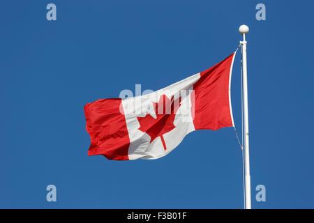Bandiera canadese battenti contro il luminoso cielo blu conosciuta come La Foglia di acero e l'Unifolie Foto Stock
