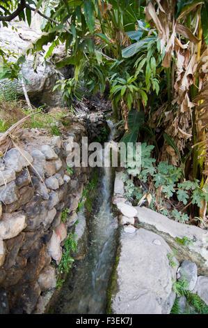 Falaj, antichi tradizionali Omani sistema di irrigazione nell'oasi villaggio di Misfat al Abrayeen nel Sultanato Foto Stock