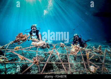 Vista subacquea femminile di subacquei che fissa un seacrete sul fondale, (acciaio artificiale reef con corrente Foto Stock