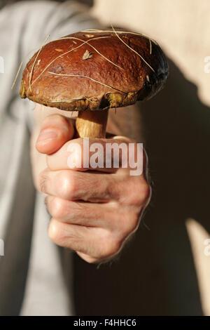 Close up di una mano di un uomo di contenimento di funghi commestibili, Boletus edulis, Penny bun, porcino Foto Stock