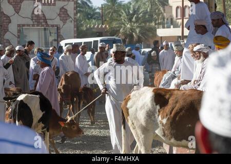Omani uomo conduce la sua mucca a Nizwa giovedì giorno di mercato. Nizwah è famosa per la sua vivace souq e mercato Foto Stock