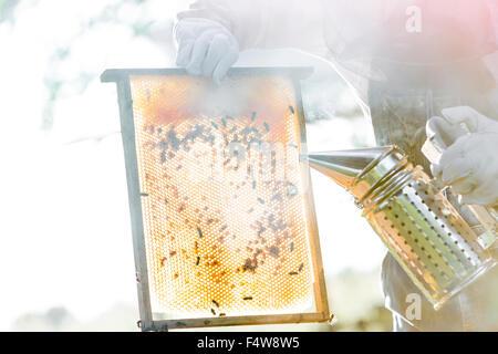 Apicoltore utilizzando fumatore per calmare le api sul favo di miele Foto Stock