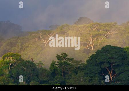 La mattina presto la luce e la nebbia nella foresta pluviale del Parco nazionale di Soberania, Repubblica di Panama. Foto Stock