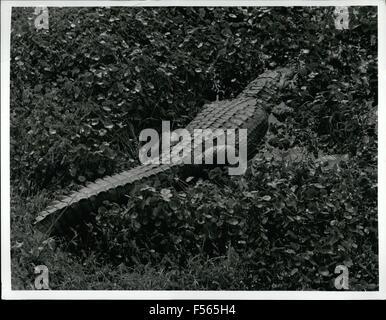 1968 - Parco nazionale delle Everglades leader cittadino, il coccodrillo, può essere visto in grandi numeri da una torre di osservazione al termine della Valle di squalo Loop road, che sarà aperto ai visitatori, tramite il tram treno, dopo gennaio 15. © Keystone Pictures USA/ZUMAPRESS.com/Alamy Live News Foto Stock