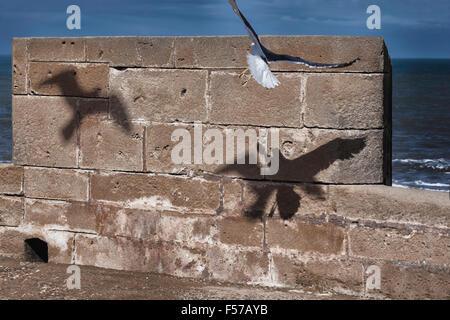 Flying seagull ombre contro il muro di pietra. Foto Stock