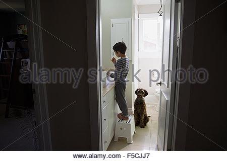 In attesa del cane per il ragazzo la spazzolatura dei denti su uno sgabello Foto Stock