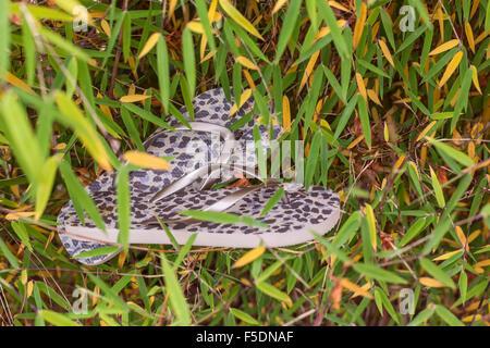 Sandali estivi sul bambù caduta foglie. Concetto di autunno. Foto Stock