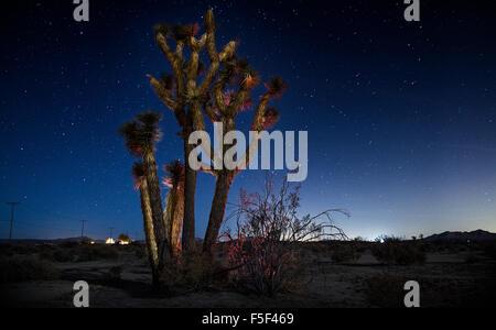 A Joshua tree cactus illuminata di notte Foto Stock