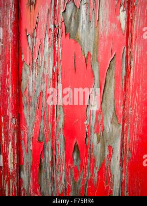 Peeling vernice rossa su una porta di legno Foto Stock