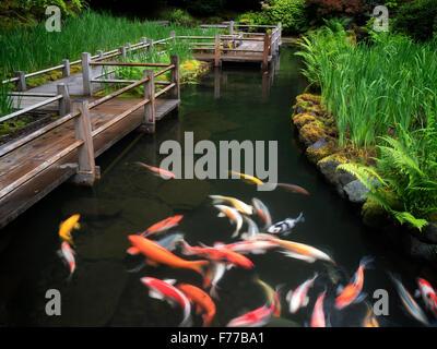 Koi e iris percorso letti. Giardini giapponesi, Oregon Foto Stock