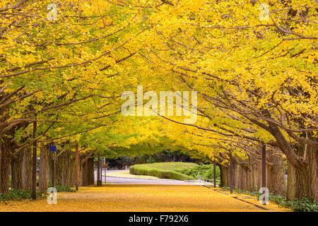 Tokyo, Giappone autunno park. Foto Stock