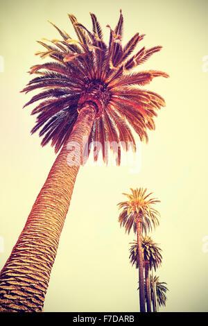 Vintage tonica palme al tramonto, vacanze sfondo, Santa Monica, Stati Uniti d'America. Foto Stock