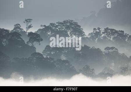 La nebbia sorgere all alba su di Danum Valley, Sabah, Malaysia Foto Stock