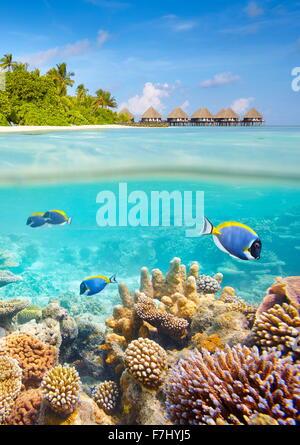 Vista subacquea con barriera corallina e pesci, isole delle Maldive Foto Stock