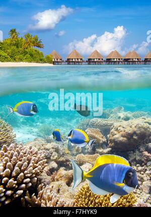 Vista subacquea a pesci tropicali e reef, isole Maldive, atollo di Ari Foto Stock