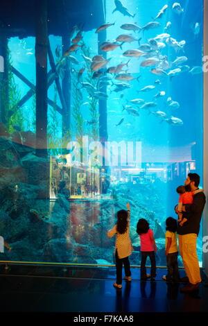 Il centro commerciale di Dubai Aquarium, Dubai, Emirati Arabi Uniti, Medio Oriente Foto Stock