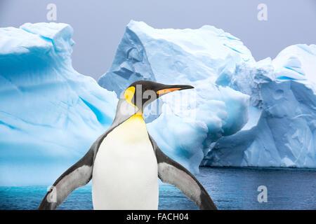 Pinguino reale e iceberg in Antartide. Foto Stock