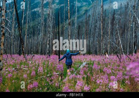 Vista posteriore della metà donna adulta in equilibrio su albero caduto in un campo di fiori selvatici, Moraine Foto Stock