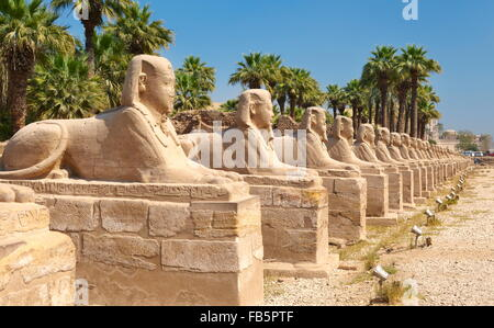 Viale di sfingi in Tempio di Luxor Luxor Egitto Foto Stock
