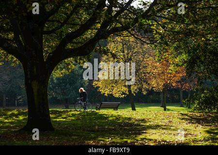 Astley Park, Chorley Lancashire. Uomo in bicicletta attraverso il parco su una calda e soleggiata giornata autunnale. Foto Stock
