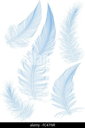 Set di liscio piuma blu, vettore Foto Stock